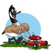 cartoon-bird
